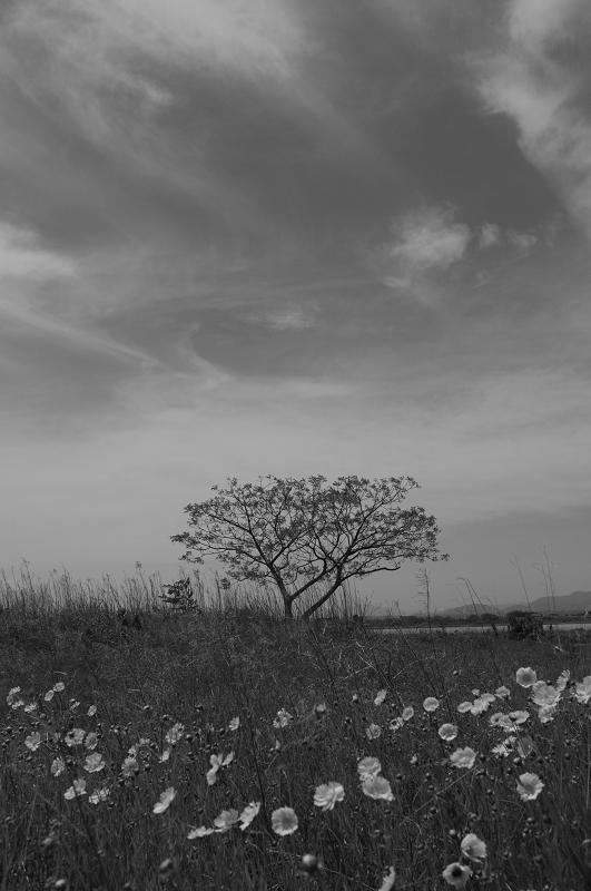 f:id:tfujimura:20110513160136j:image:h640