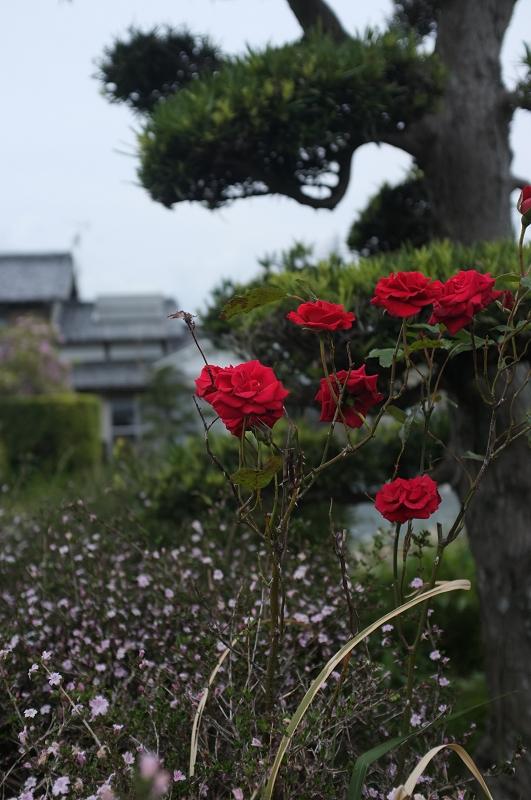 f:id:tfujimura:20110516142442j:image:h640