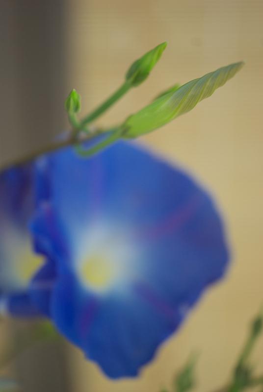 f:id:tfujimura:20110815014911j:image:h640