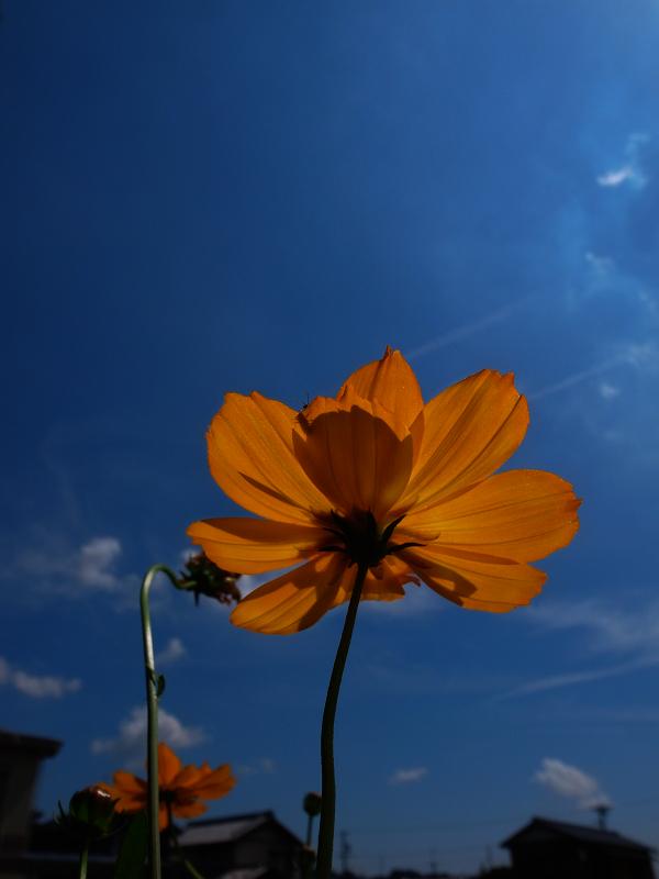 f:id:tfujimura:20110909160623j:image:h640