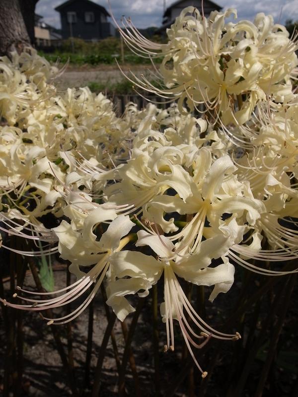 f:id:tfujimura:20111003132537j:image:h640