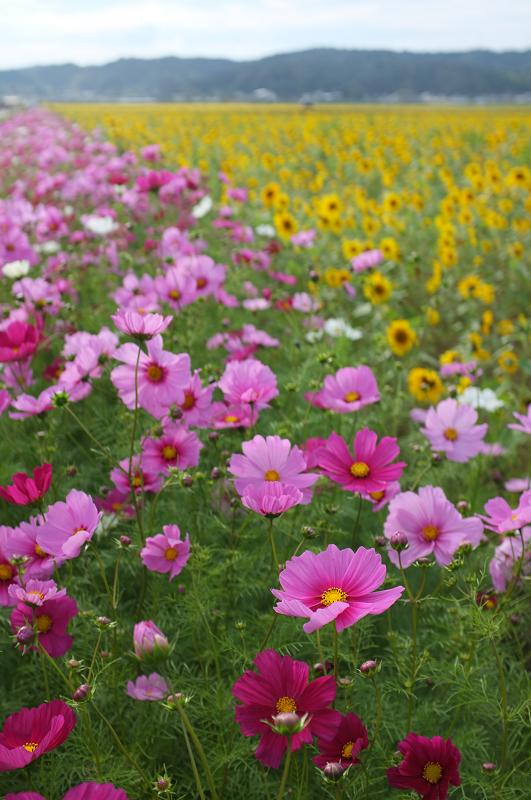 f:id:tfujimura:20111025234205j:image:h640