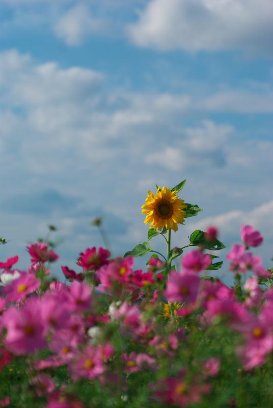 f:id:tfujimura:20111025234208j:image:h640