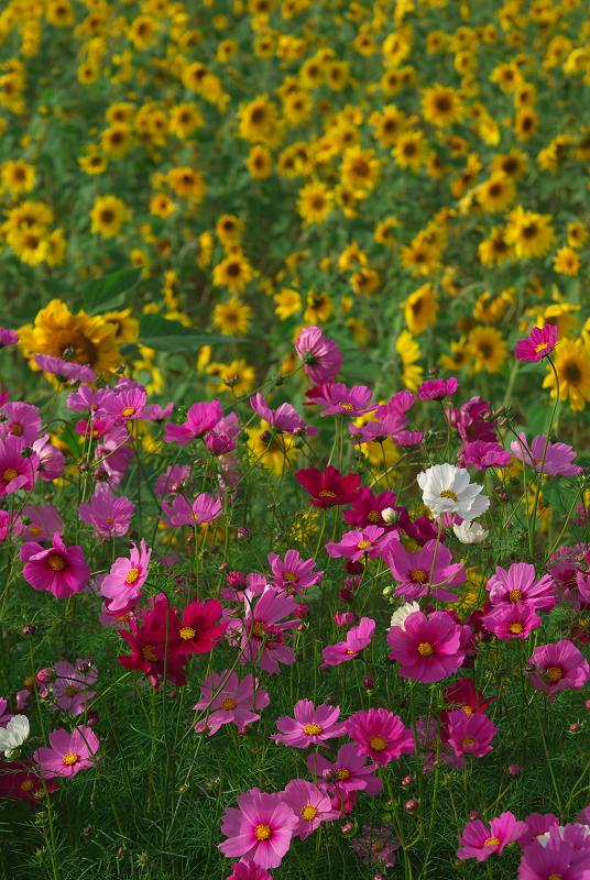 f:id:tfujimura:20111025234209j:image:h640