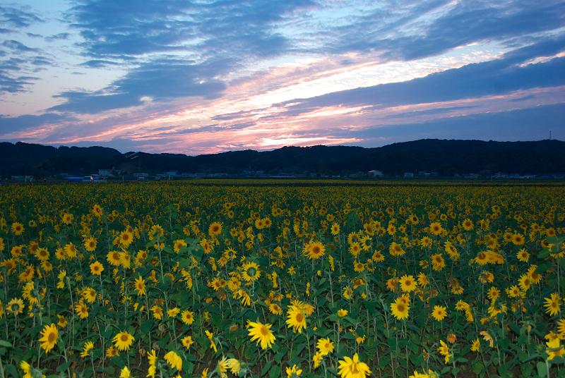 f:id:tfujimura:20111025234214j:image:w640