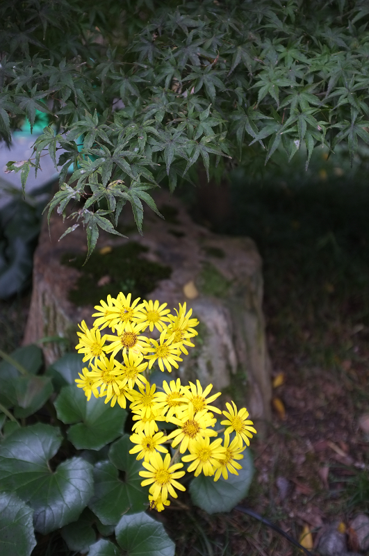f:id:tfujimura:20111107231317j:image:h640