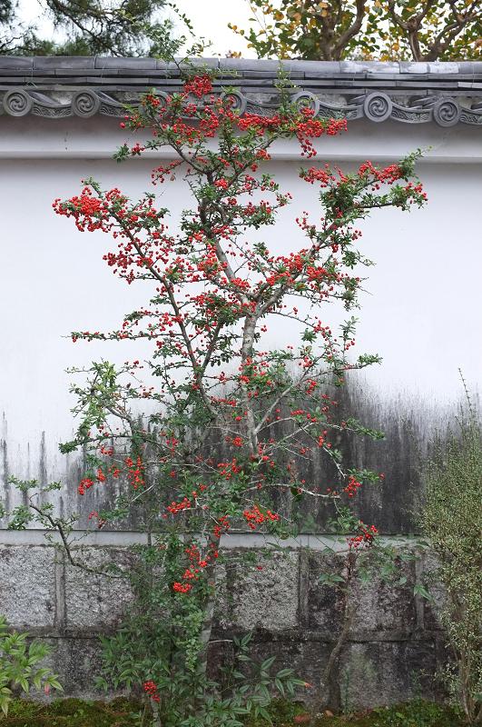 f:id:tfujimura:20111107231323j:image:h640