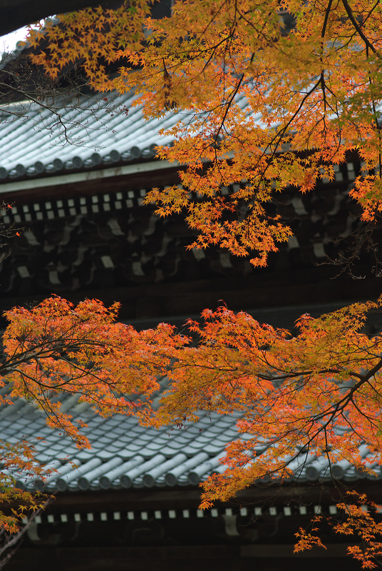 f:id:tfujimura:20111123212230j:image:h640