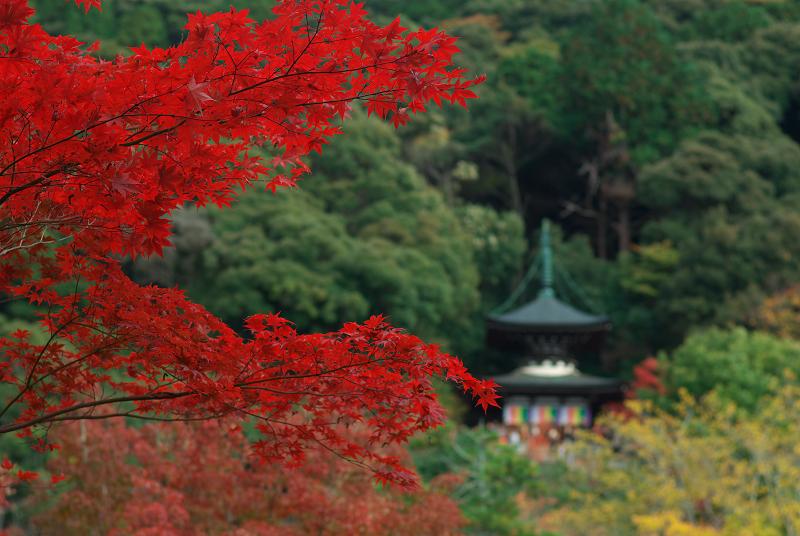 f:id:tfujimura:20111123212238j:image:w640