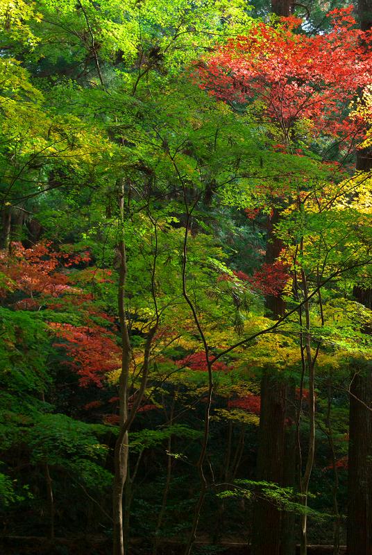 f:id:tfujimura:20111130170647j:image:h640