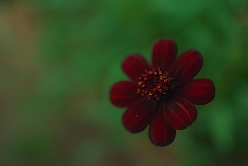 f:id:tfujimura:20120922232211j:image:w640