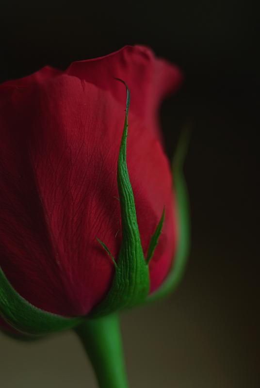 f:id:tfujimura:20140208121111j:image