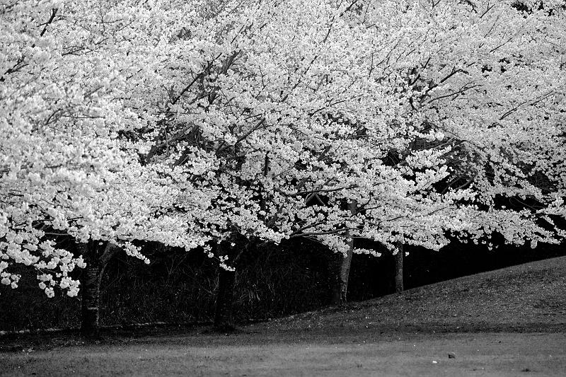 f:id:tfujimura:20140331204358j:image