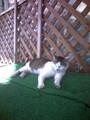足柄SAのネコ