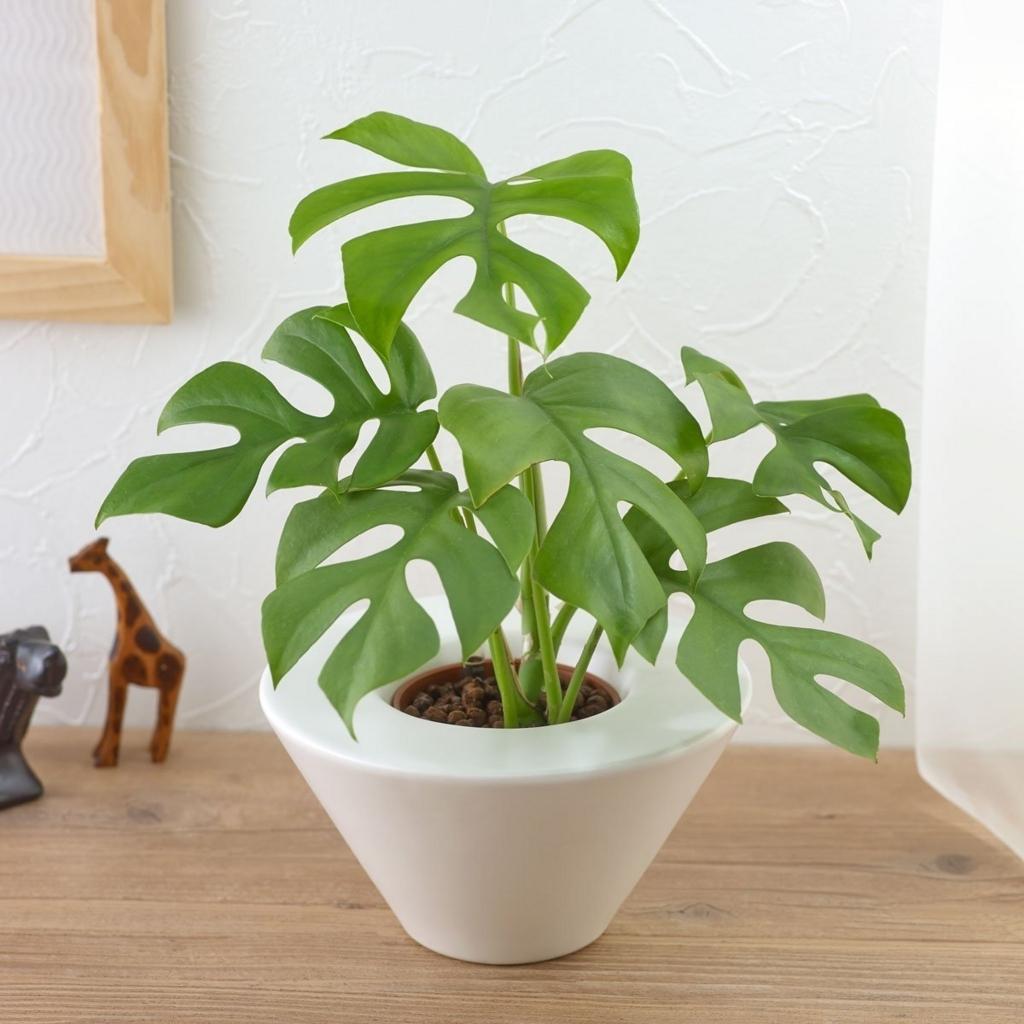 お手入れ簡単な観葉植物