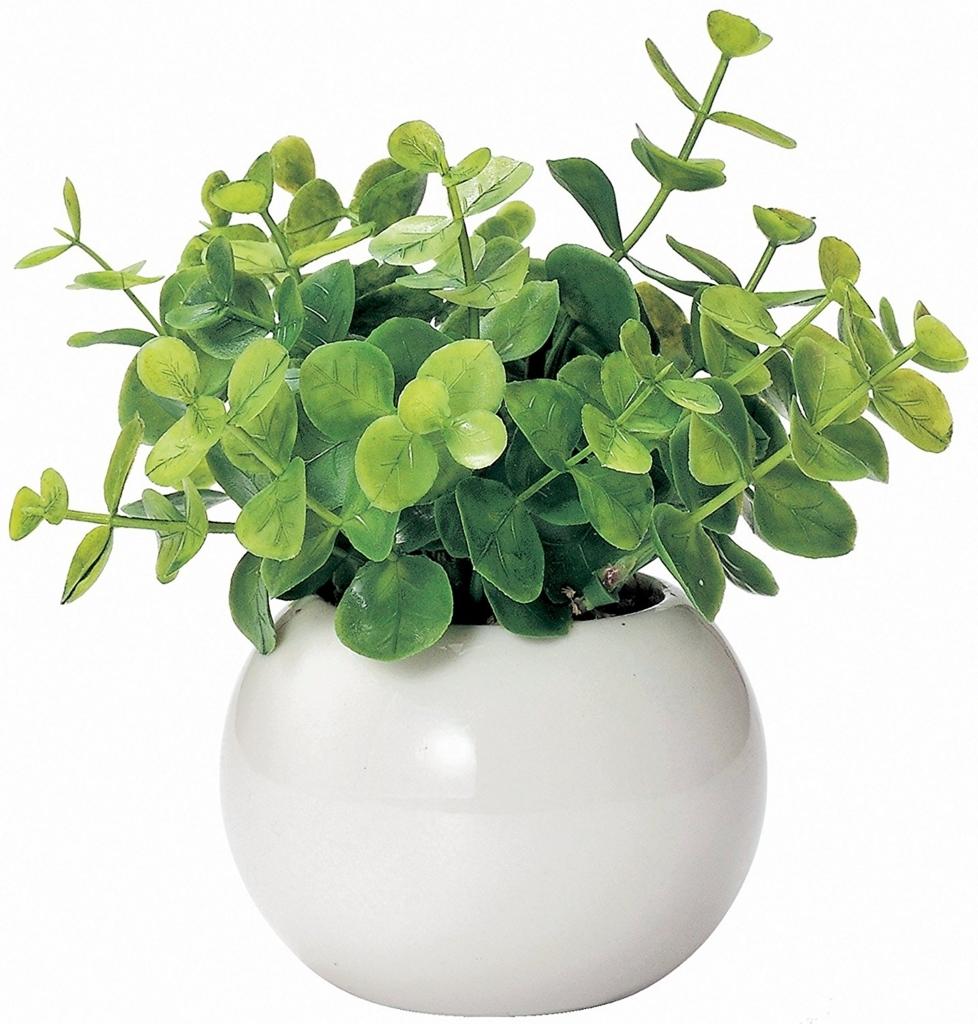 グリーンユーカリ コンパクトな観葉植物
