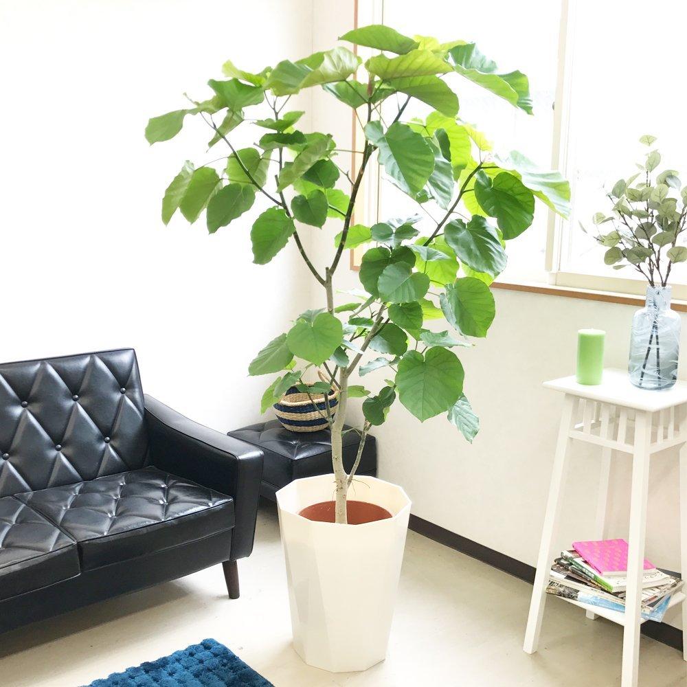 光が降り注ぐ部屋に癒しを与える観葉植物
