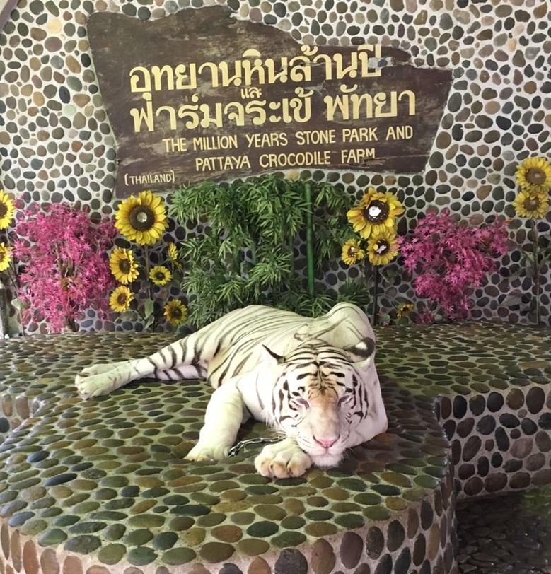 f:id:thaihamster:20190507124700j:plain