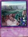 王宮の鉄壁 トラップ 遊戯王カード KONAMI