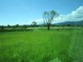 園内バスからの風景。遠くに見えるのは赤米と黒米。