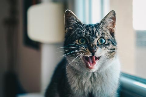 猫のストレス反応