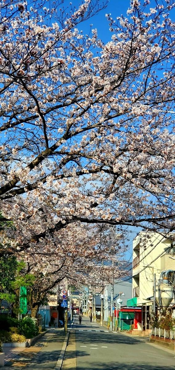 f:id:the_kyoto:20210324091253j:plain