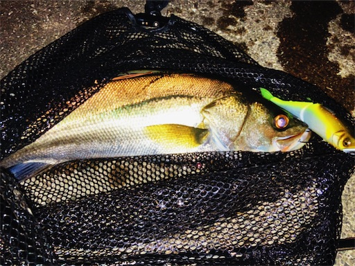 f:id:the_topdog_lures:20210922010733j:image