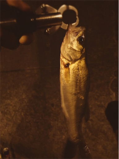 f:id:the_topdog_lures:20211010224200j:image