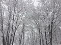 樹氷 信州八方尾根