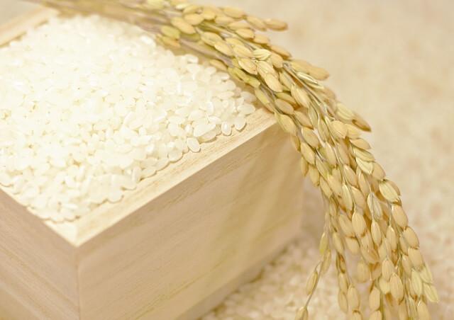 日本酒の原料加工「お米の下ごしらえ」を徹底解説!|theDANN media