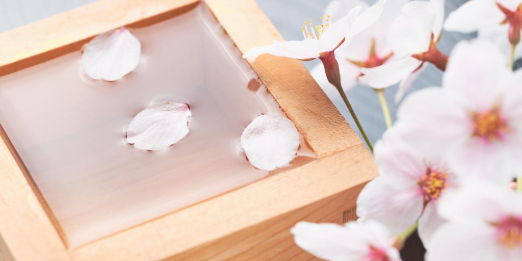 お花見におすすめの日本酒5選|theDANN media