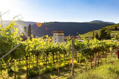 白ワインの産地|theDANN media