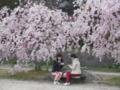 京都新聞写真コンテスト 二人でお花見