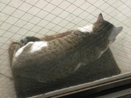 f:id:three-gremlins:20121019121133j:image
