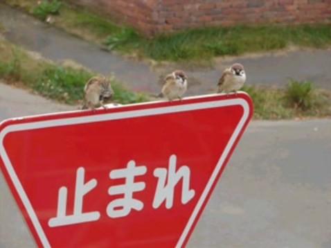 f:id:three_sparrows:20090307034729j:image:w480