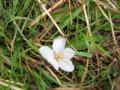 [花]落ちた花弁
