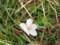 落ちた花弁