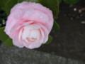 [花]バラ