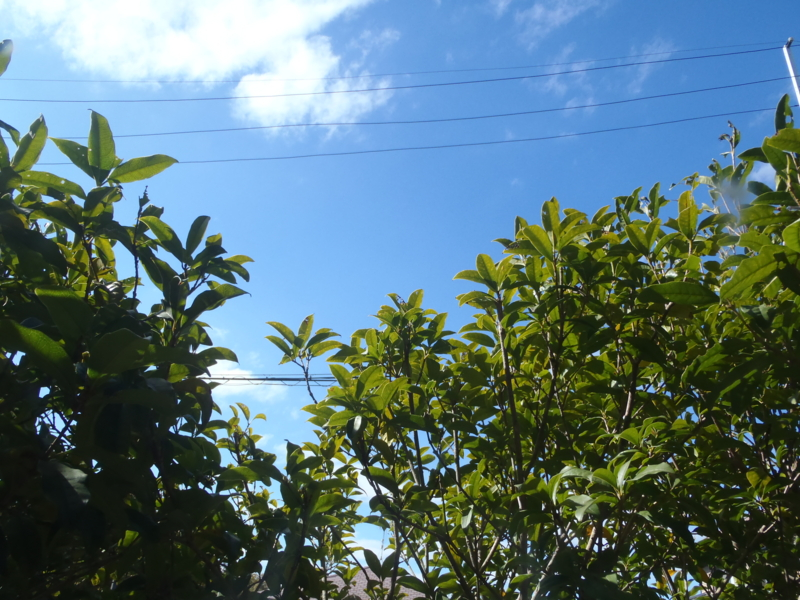 f:id:thtitdte-gmail-com:20101117122122j:image