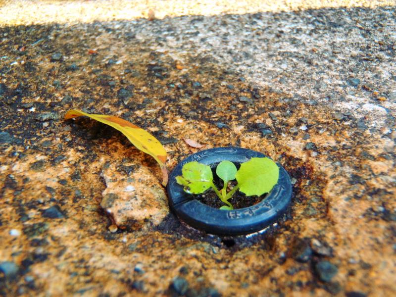 f:id:thtitdte-gmail-com:20101120115429j:image