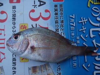 f:id:thtitdte-gmail-com:20110713185503j:image