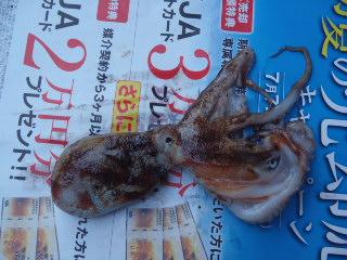 f:id:thtitdte-gmail-com:20110713185726j:image