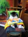 下北沢の名物猫、ドヤ顔で絵本を読むの巻