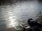 釣り人ログアウトのパターン