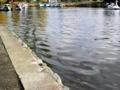 [石神井公園][カレー][おでん][ジュース]ちょっとしたことで氾濫しそうな池のほとり