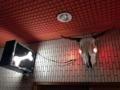 [四谷三丁目][ラーメン]牛の眼が赤く光っていれば営業中
