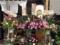 開店祝いの花もたくさん。暖簾にも打ちたて自家製麺の表記が