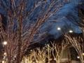 [表参道][明治神宮前][原宿][アイス]おなじみ表参道のイルミネーションがキレイ