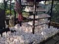 [豪徳寺][建築][寺院]ニャーニャー立ち並ぶ招き猫