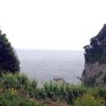 [江ノ島][片瀬江ノ島][菓子][饅頭][漫画][孤独のグルメ]この時は雑草が見事に生え揃ってて見えづらかったんですが